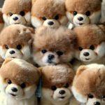 ТОП-10 лучших мастеров маскировки среди домашних животных