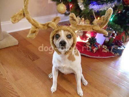 костюм оленя для собаки