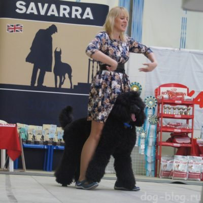 фристайл с собаками