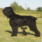 Большие и маленькие собаки