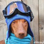 Самая знаменитая фараонова собака — Руфус