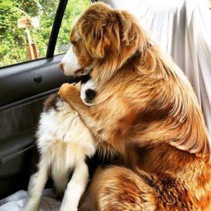 обнимашки у собак