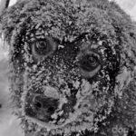 О Собачьей Преданности и человеческой подлости…