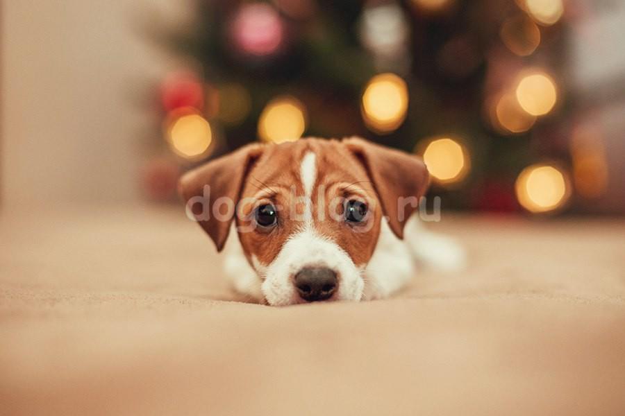щенок в подарок