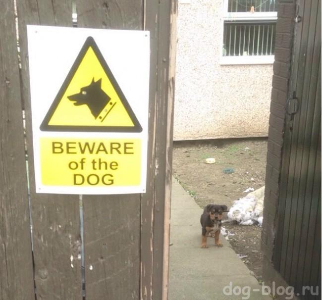 осторожно злая собака