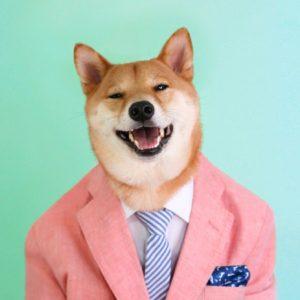 одетая собака