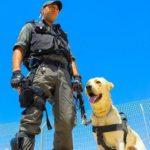 Собаки в армии Израиля