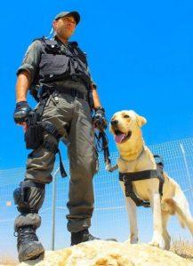собаки на службе в армии