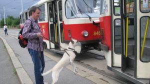 "книга И.Замлелова ""С Собакой на авто"