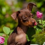 Собаки и лето