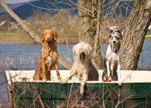 собаки летом