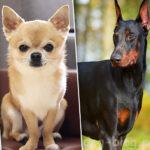 Какая ты собака по знаку зодиака?