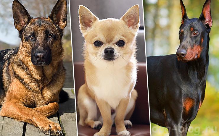 какая ты собака по знаку зодиака