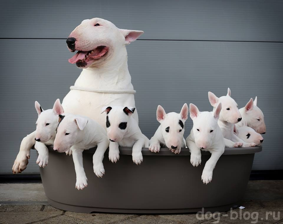 фразы про собак