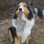 Бравекто для собак: отзыв  о вреде таблетки. Вся правда о препарате.