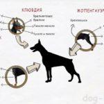 Внешнее строение собаки :)
