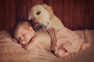 собака и новорожденный