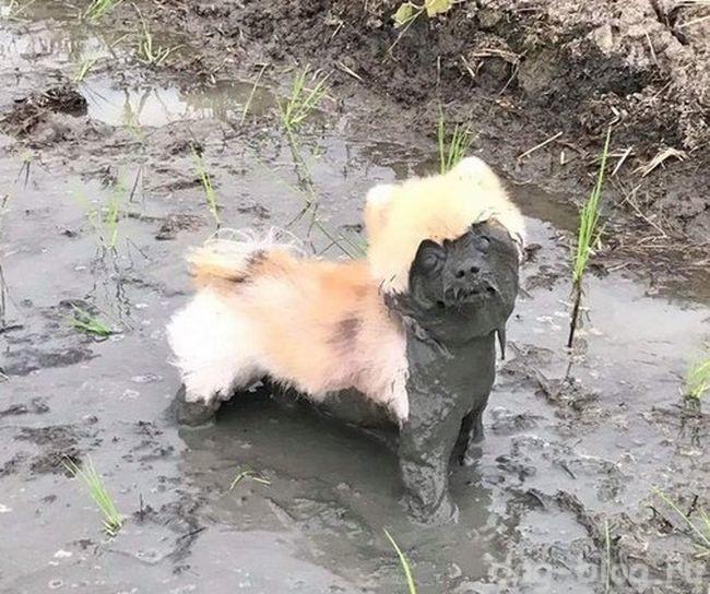 учимся у собак