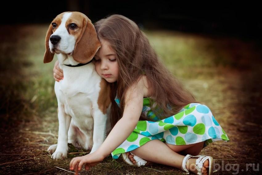 собаку нельзя заводить