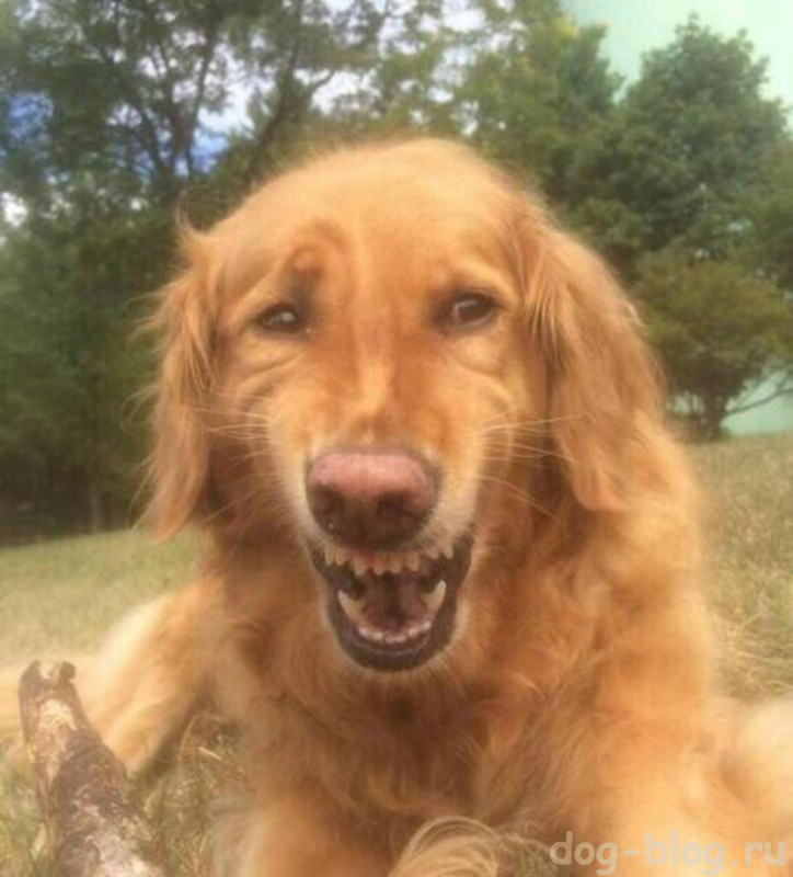 мимика собаки