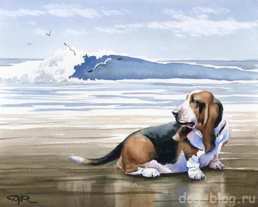 живописные собаки