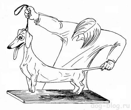 выставочная стойка собаки