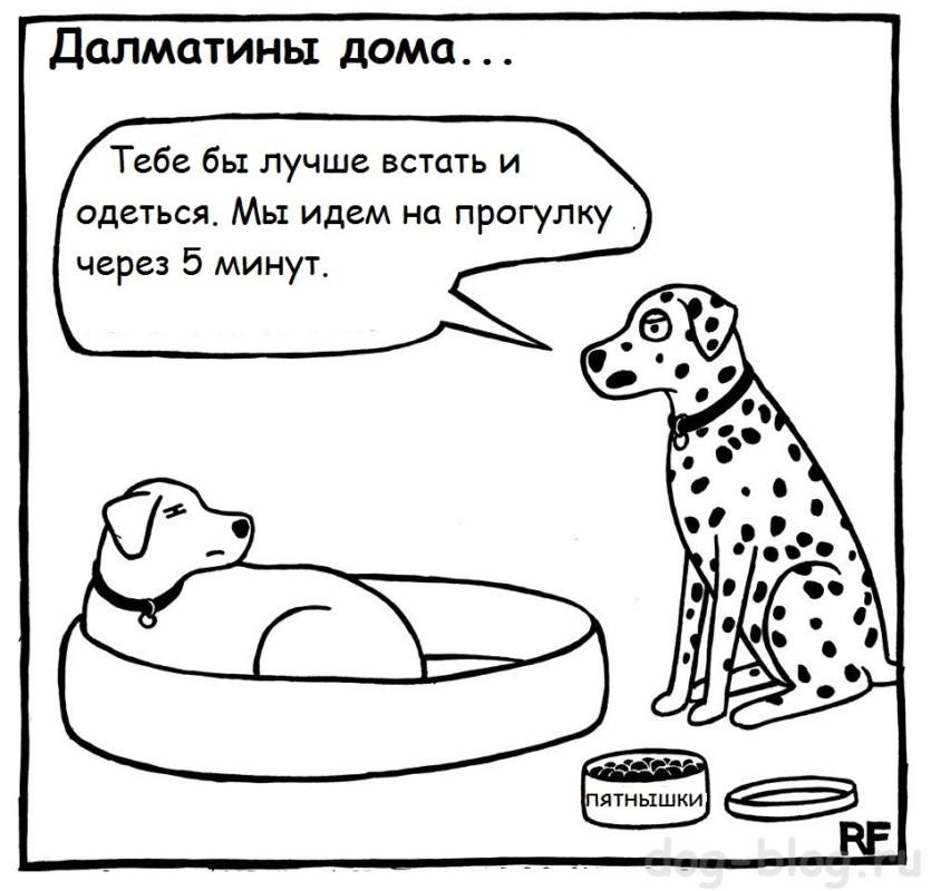 комикс - далматин идёт на прогулку