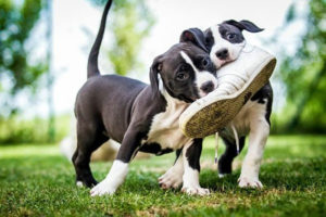 как отучить щенка грызть вещи