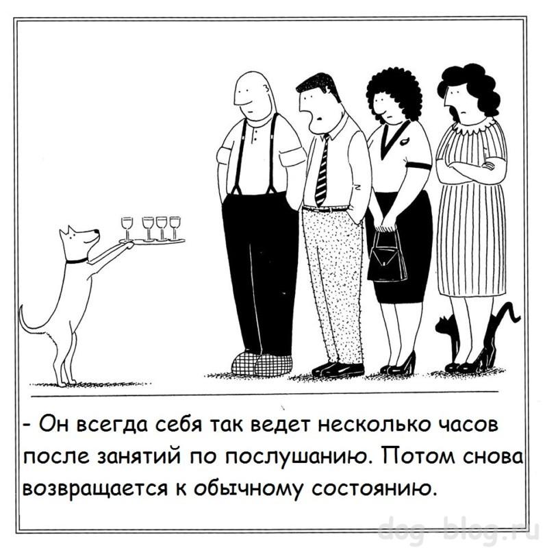комиксы про собак