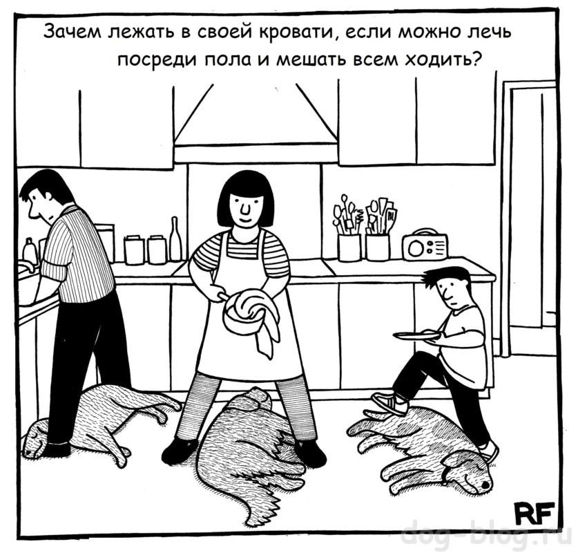 собаки валяются на полу комикс