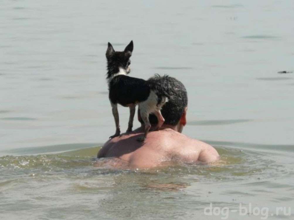 собака плывёт на хозяине