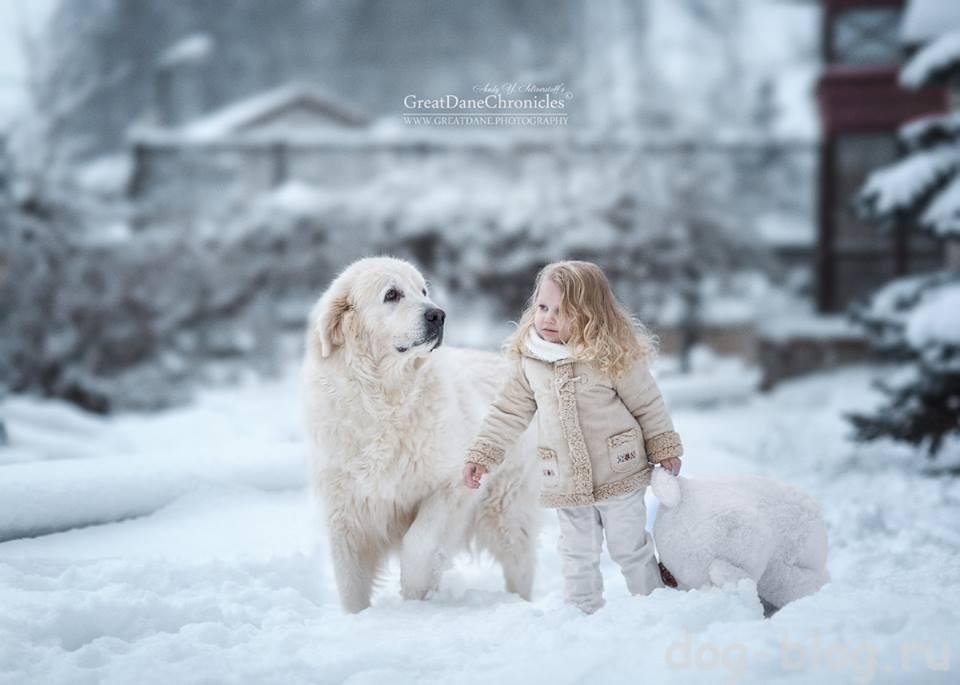 зимняя прогулка собаки и девочки