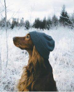 красивая собака в шапке