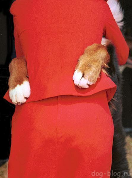 собачья шерсть на одежде