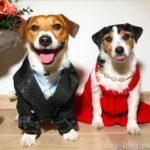 Выбираем питомца — как определиться с полом собаки?