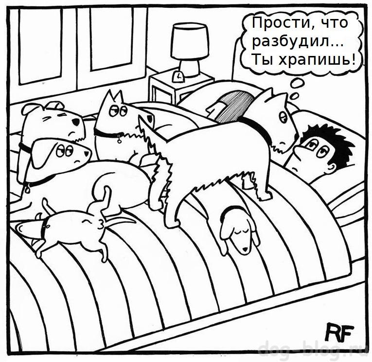 комиксы про собак - собака будит хозяина
