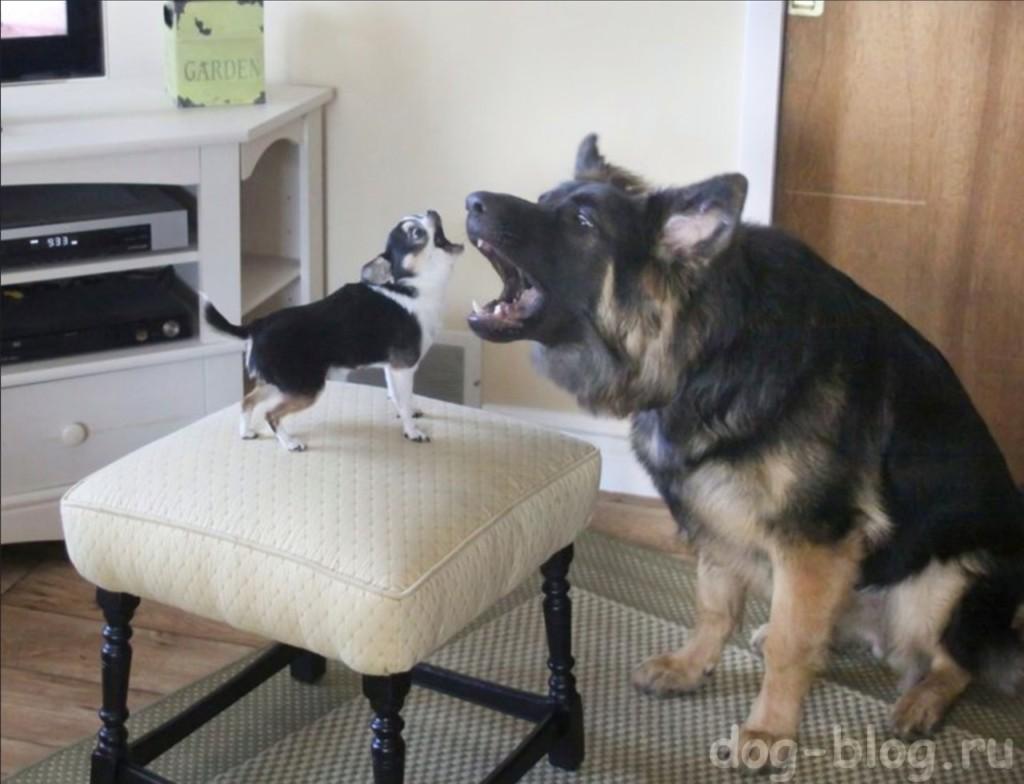 почему воет собака причины