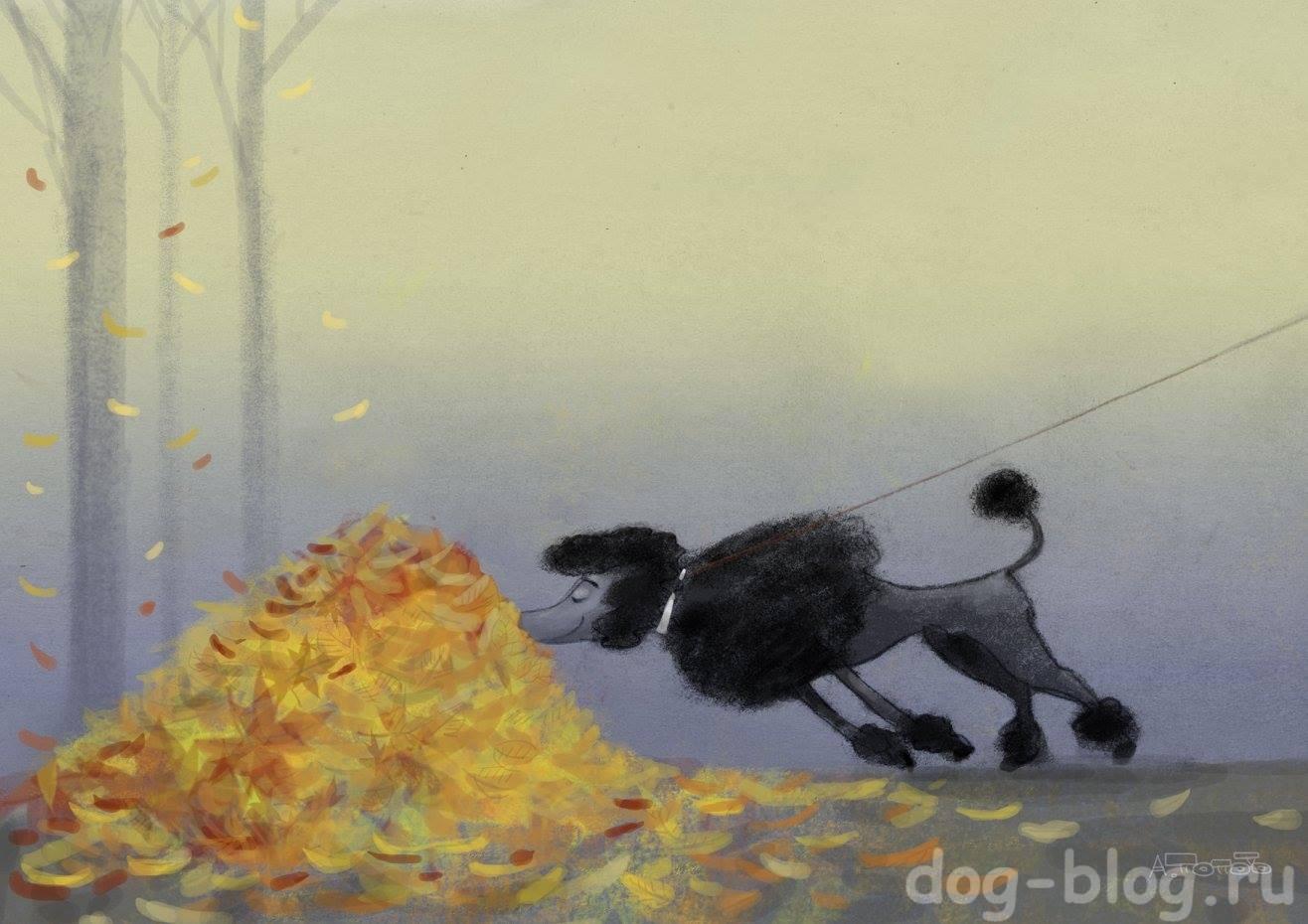 смешные рисунки про собак