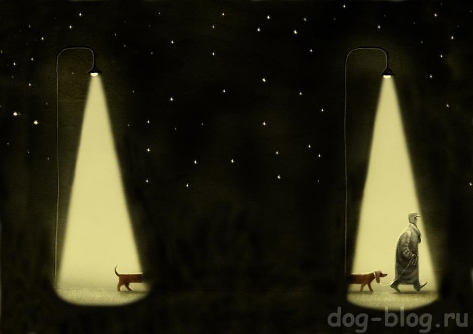 собаки в карикатурах