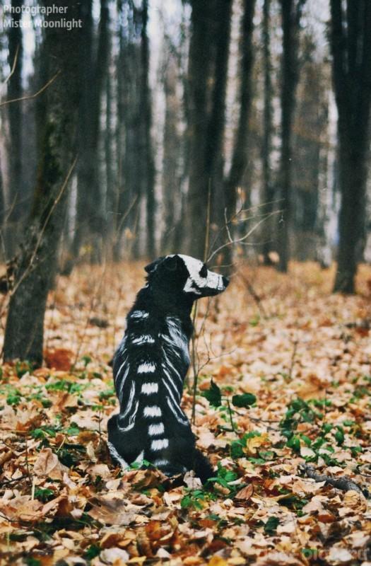 хэллоуин для собак