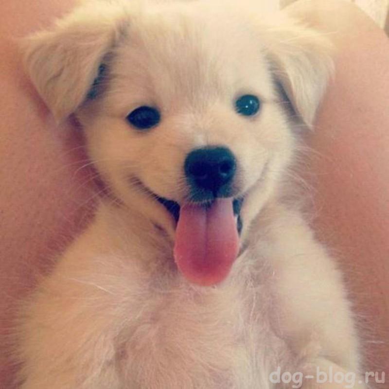 щенок с милой мимикой