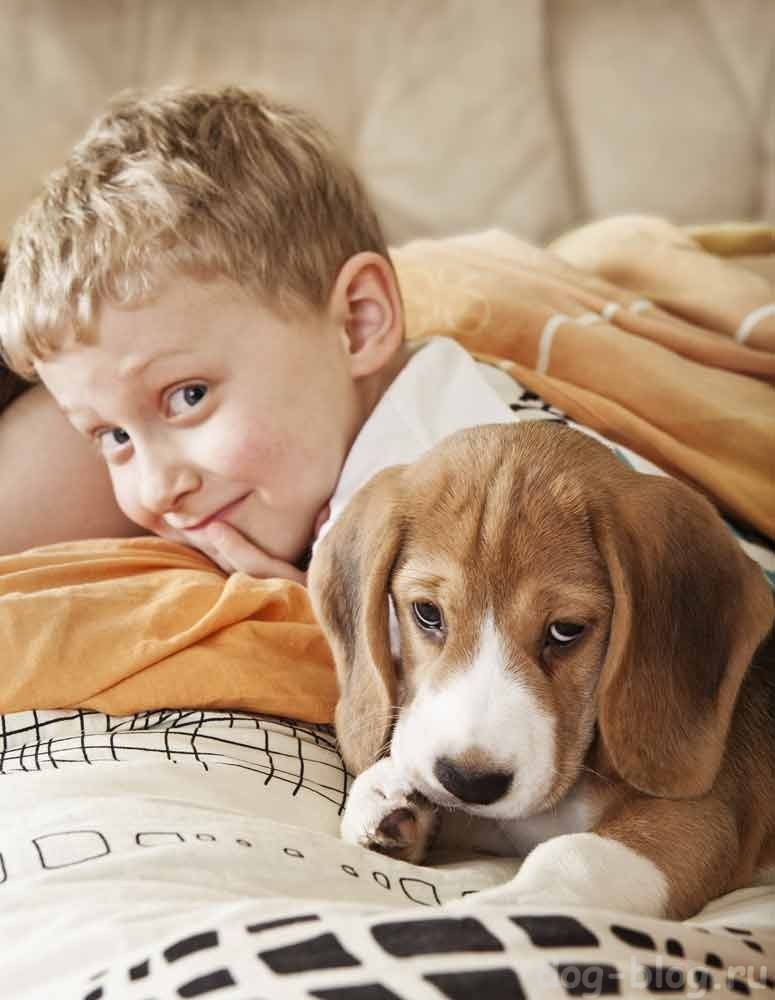 общение собаки и ребёнка