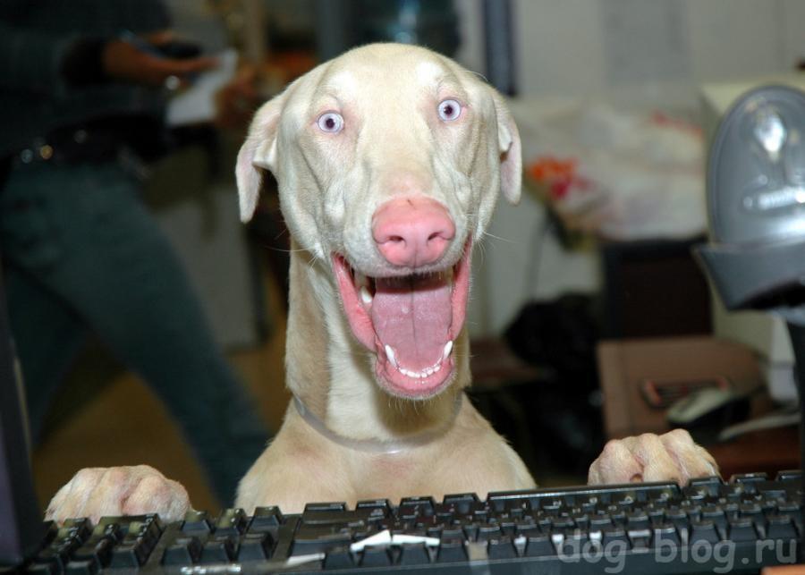 смешная мимика у собаки