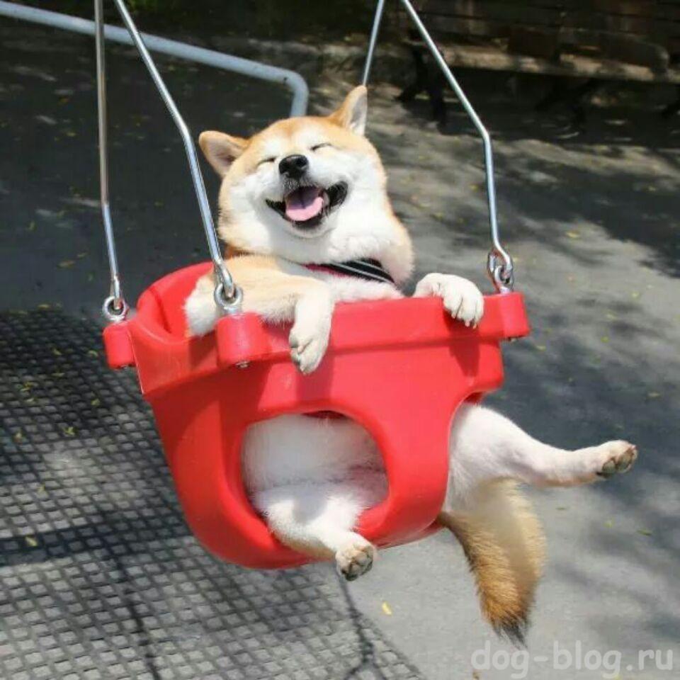 пример мимики у собаки