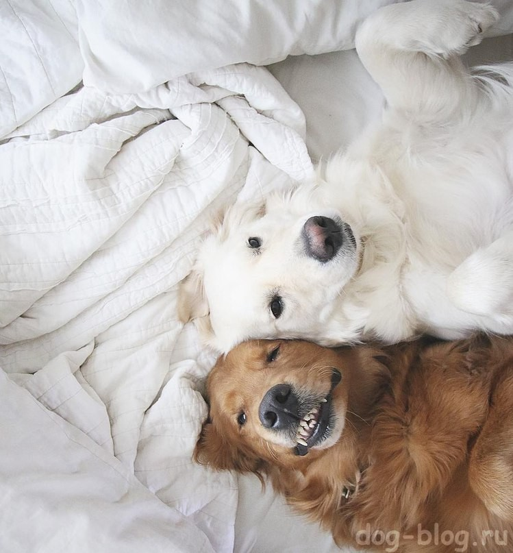 собаки в постели
