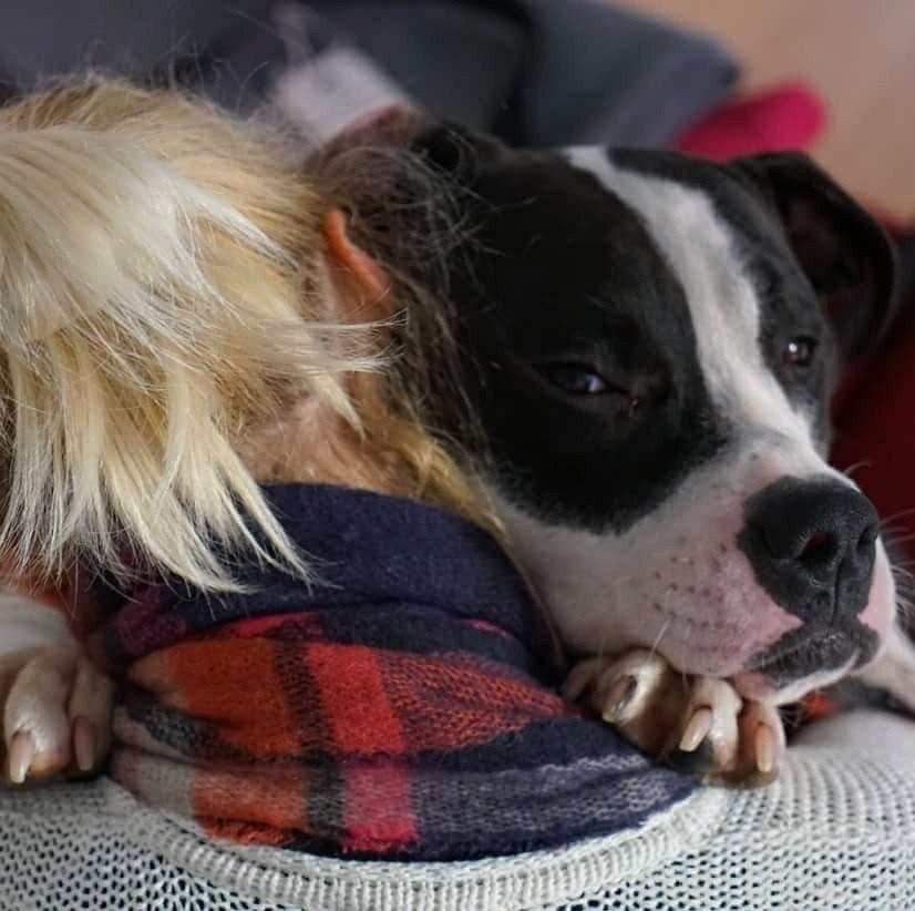 объятия с собакой