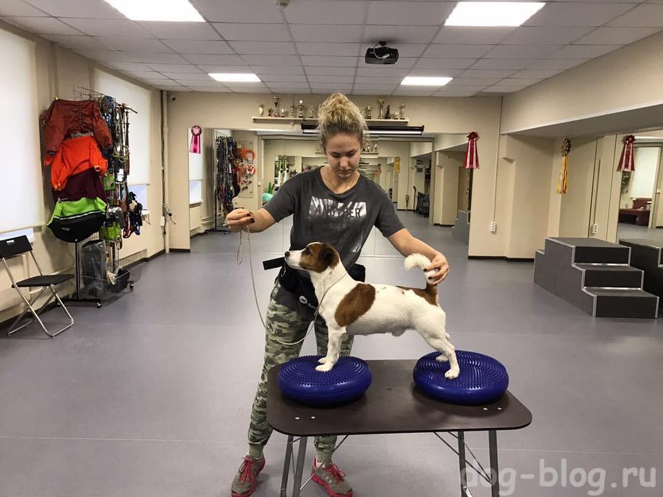 тренажёр для стойки собаки - балансировочные кочки