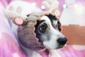 вязаная шапка на собаке