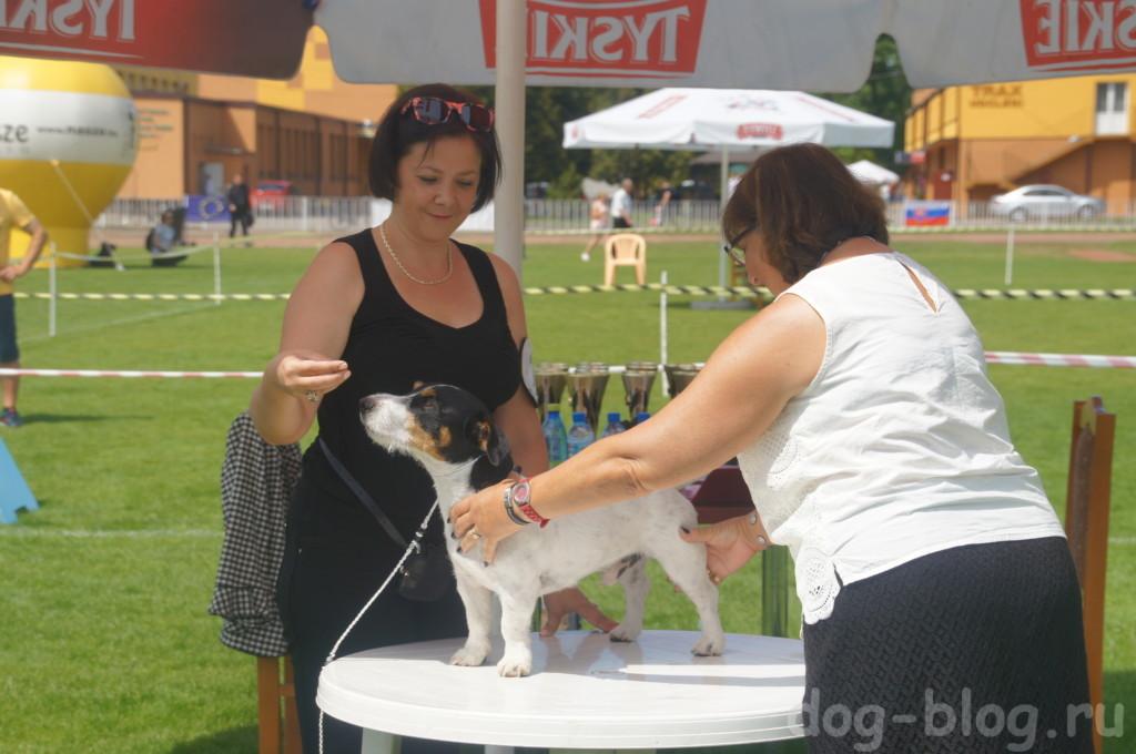 Международная выставка собак в Польше 2016 г