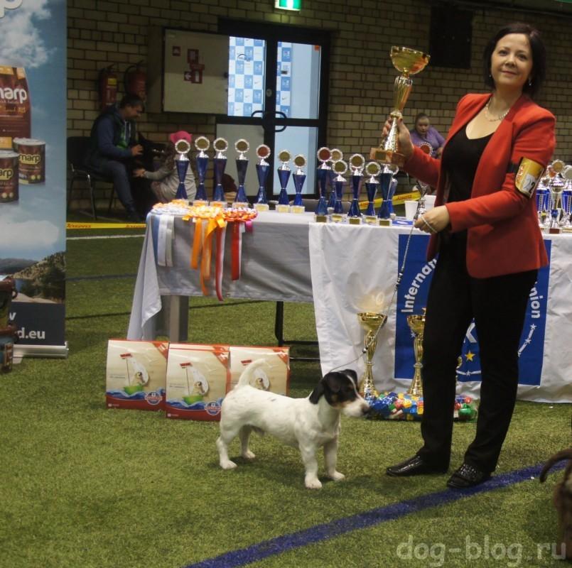 международная выставка собак в Риге 2016 г